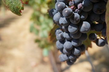 grapes-908756_640